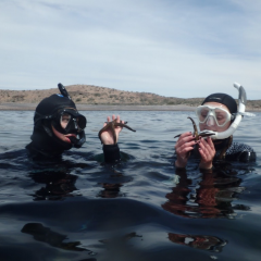 Making marine biology discoveries in the waters of Kino Bay.